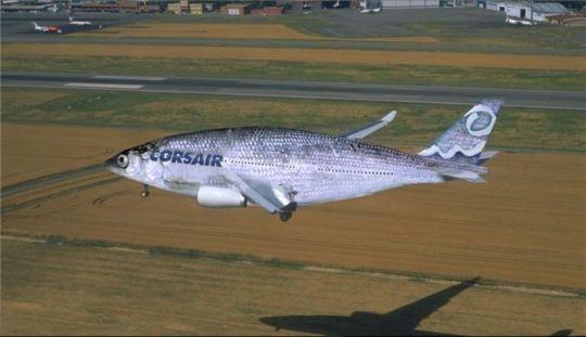 corsairfish