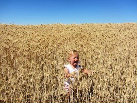 wheaties_1000