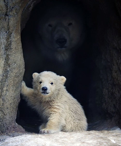 mommabeary