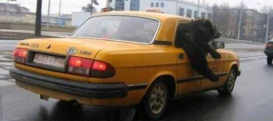 taxibear