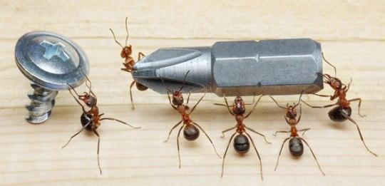 carpenter-ant-control-vancouver-bc