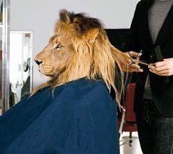 lioncut
